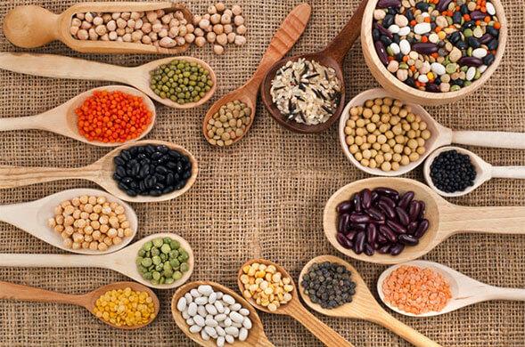 legumineuse-proteine